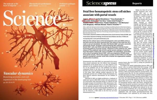Science: no figado fetal, esperança de expansão de celulas usadas em transplantes de medula