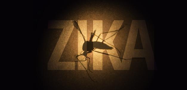Um novo surto de zika é improvável nos próximos anos