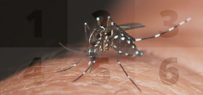 Os seis pontos do plano estratégico contra Zika e a microcefalia