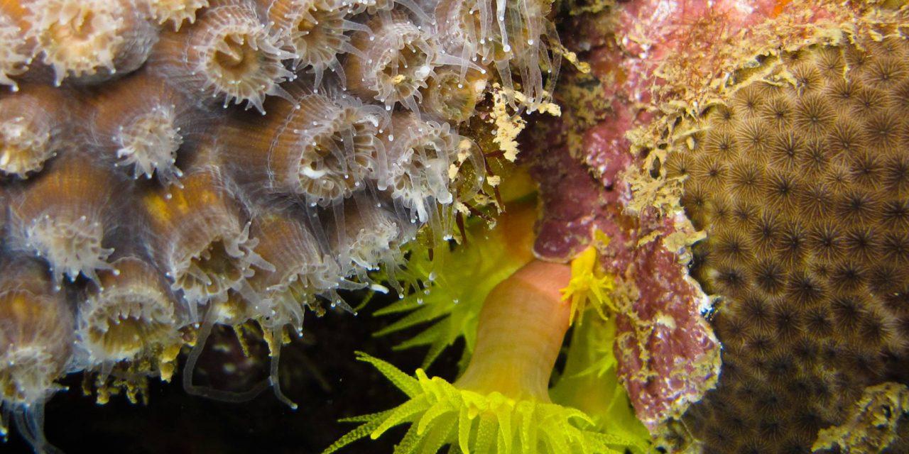 Um coral construtor de recifes