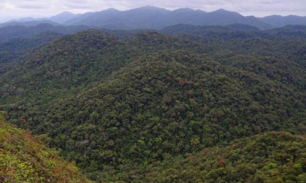 Projeto reúne diferentes disciplinas para gerar modelos de predição da biodiversidade na Floresta Atlântica