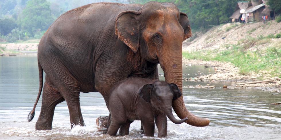 Um lar para elefantes no coração do Brasil