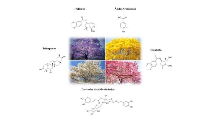 Figura 7. Exemplos de classes mais frequentes de produtos naturais acumulados nas espécies de ipês