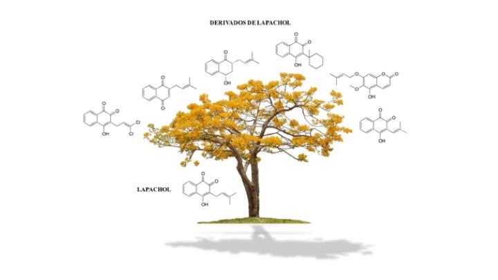 Figura 8. Naftoquinonas acumuladas nas espécies de ipês – Lapachol e derivados mais comuns nas Tabebuias