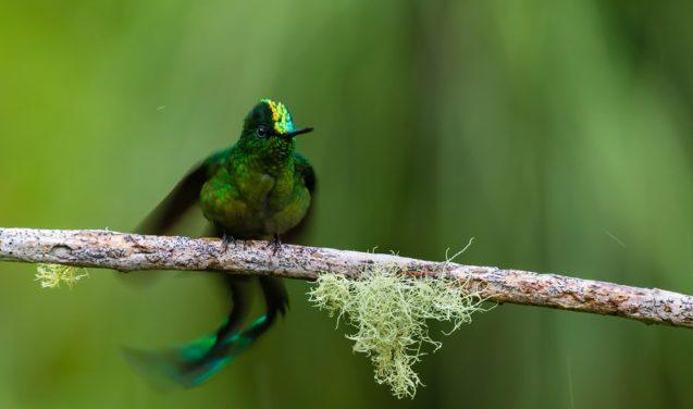 Passarinho molhado leva prêmio em concurso ecológico