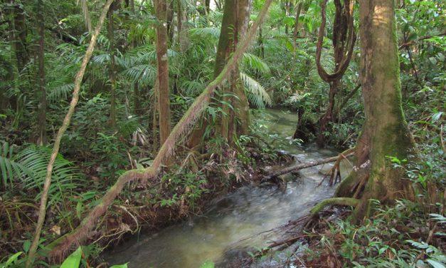 Por que os pequenos rios da Amazônia são fundamentais