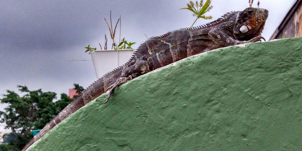 Cobras e lagartos: mapeamento vai ajudar na conservação
