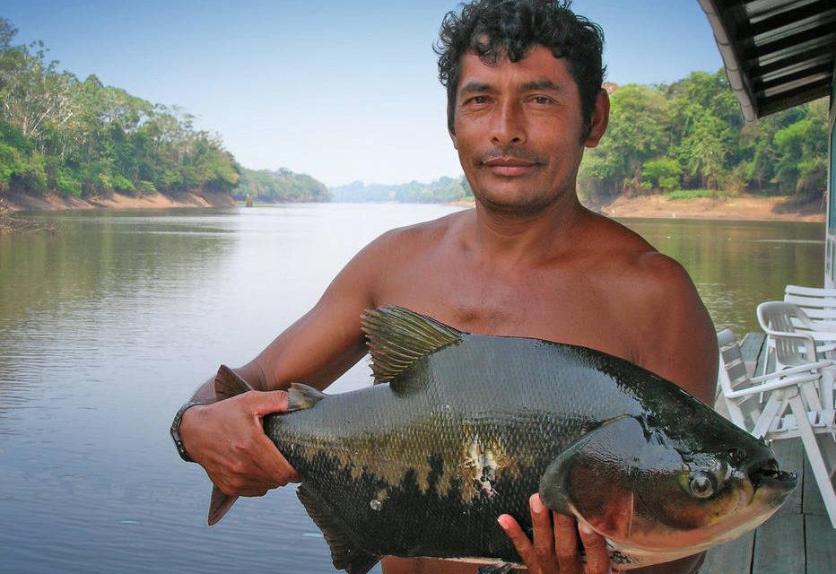 Desmatamento prejudica produção de peixes na Amazônia
