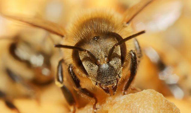Invasão (programada) de abelhas no Museu Catavento