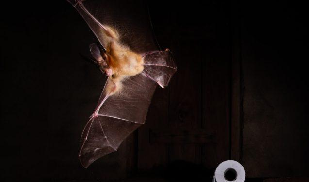 Morcego dispara a câmera e imagem leva prêmio