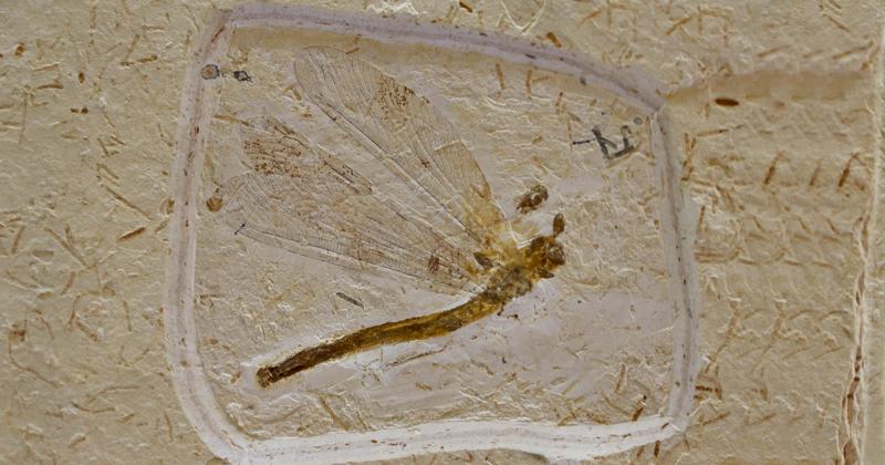 Fósseis da pré-história revelam a riqueza do Araripe
