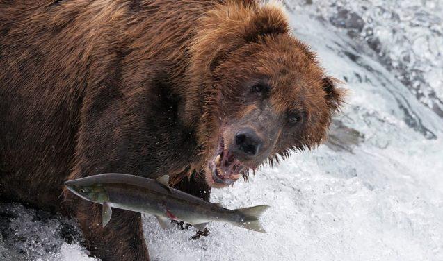 Interação entre espécies na quinta vencedora do concurso Capturando Ecologia