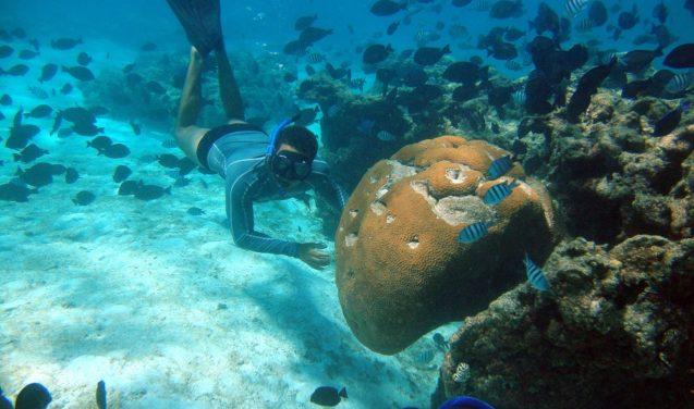 Estudando os corais para explicar as mudanças climáticas