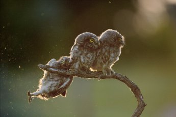 OVERALL WINNER 2017 Help by Tibor Kercz. Tibor KerczComedy Wildlife Photo Awards. WINNER of Amazing Internet Portfolio prize for his sequence of 4 Owl images.