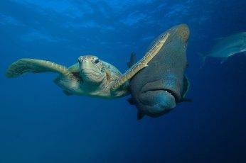 WINNER of the Padi Under The Sea category Slap by Troy Mayne. Troy MayneComedy Wildlife Photo Awards