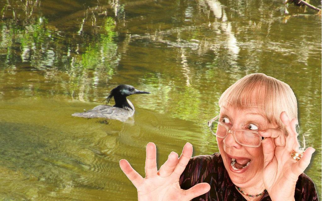 A volta dos que não foram: D. Claudine encontra o mergulhão