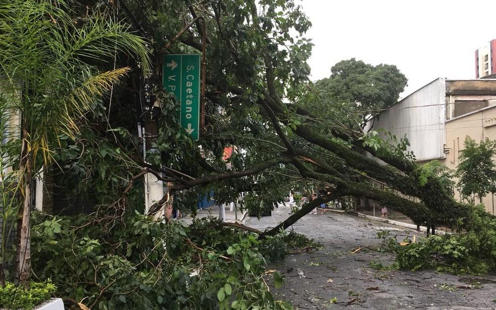 Um software que cuida das árvores da cidade
