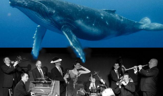 Baleias cantoras encantam Dona Claudine