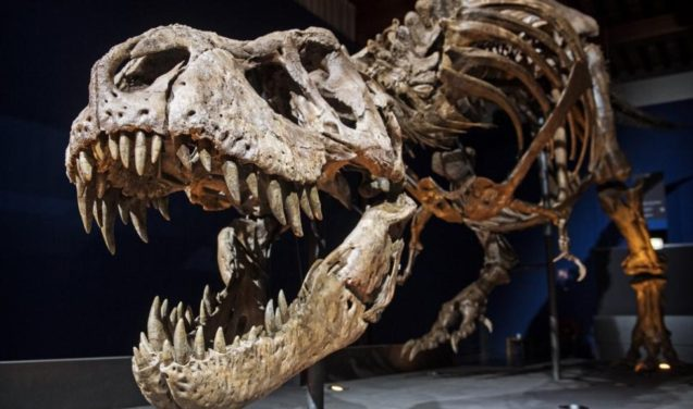 Museu de Paris expõe esqueleto inédito de T-Rex