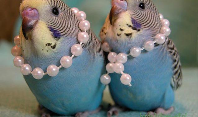 Sobre meteoros, extinção de pássaros e claudinices