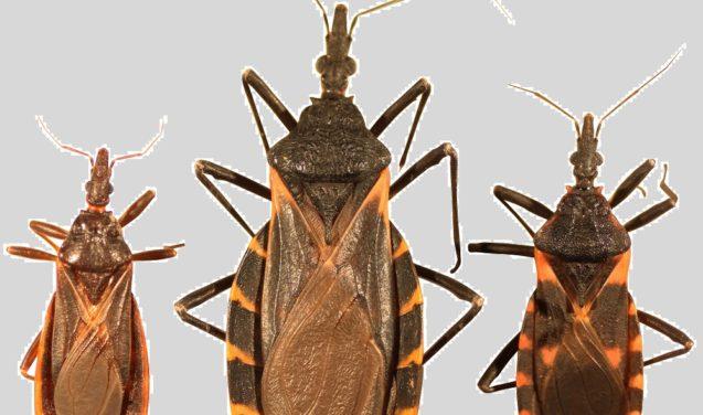 Aplicativo ajuda a identificar focos da doença de Chagas