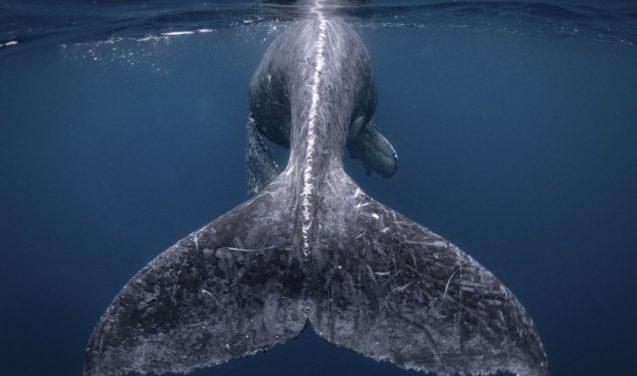 National Geographic divulga vencedores de concurso