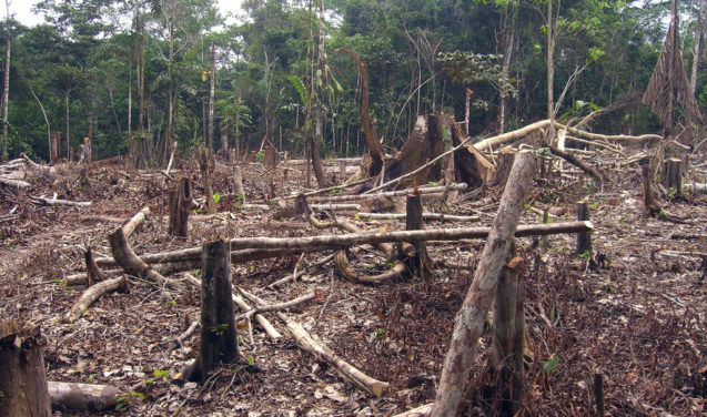 Crises econômica e política afastam o Brasil da liderança mundial em conservação ambiental