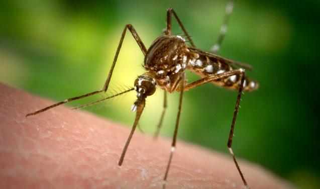 Biomarcador que detecta dengue hemorrágica é descoberto