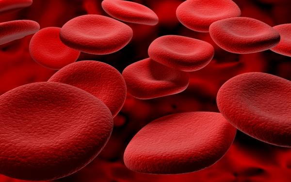 Bactérias podem ser usadas para transformar sangue tipo A em tipo O