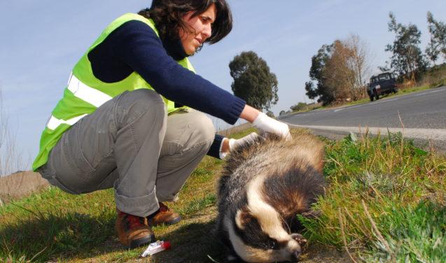 Brasil ganha banco de dados aberto sobre atropelamento de animais