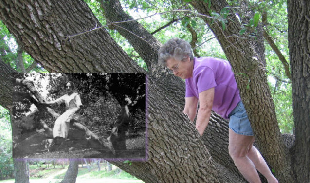 Poluição: as marcas nas árvores e no mau humor de D. Claudine