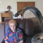 Jararaca gigante versus Vizinha cobra