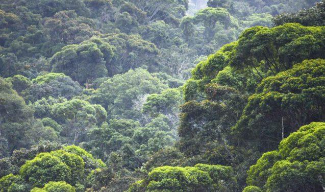 Pesquisa cria viveiros de espécies nativas para reflorestar a Mata Atlântica