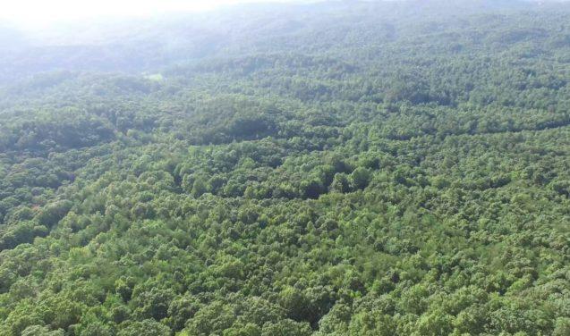 Paulo Artaxo escreve editorial sobre a Amazônia para a Science
