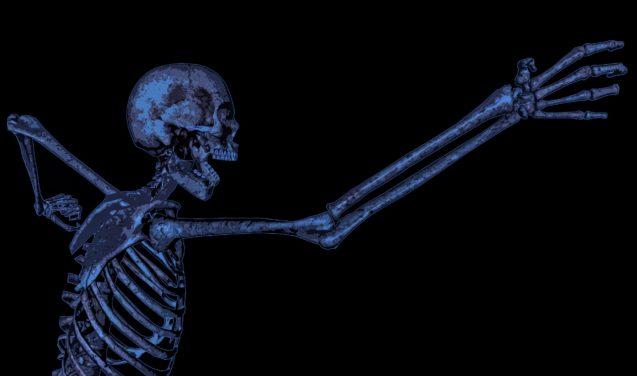 Cientistas alemães descobrem novos vasos sanguíneos em ossos