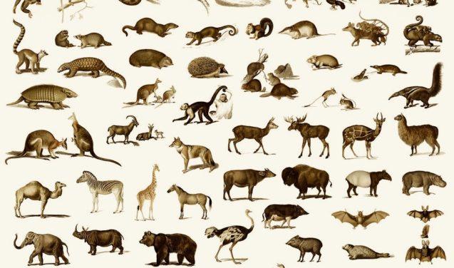 Fauna saudável ajuda a combater as mudanças climáticas